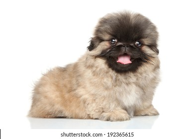 Close-up portrait of happy pekingese puppy on a white background