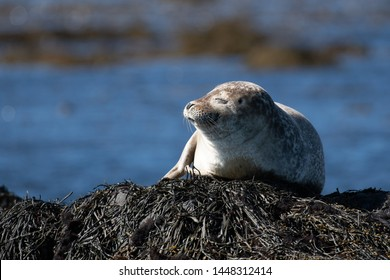 Closeup portrait of happy seal relaxing on the stone