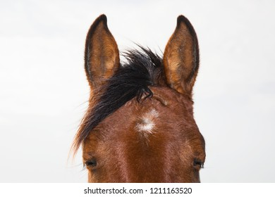 Closeup Portrait of hbrown orse with closed eyes
