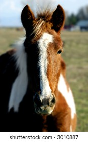 Closeup portrait of horse with blurred background