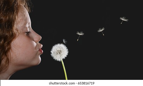 Closeup portrait little girl blowing dandelion head and flying seeds on black background.