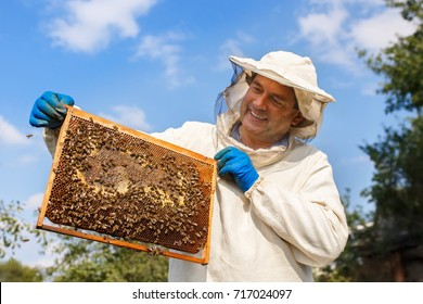 closeup portrait man holding a honeycomb full of bees. Beekeeper in protective workwear inspecting frame at apiary