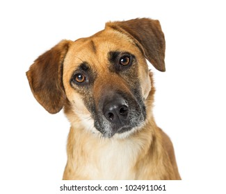 Closeup portrait of a mixed breed yellow dog with a sad expression. Isolated on white.