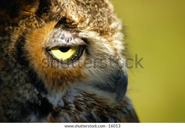 Close-up portrait of an owl face.