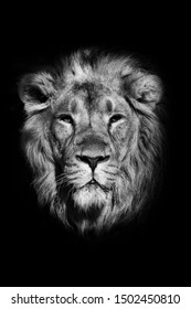 Close-up portrait of a powerful male lion isolated on a black background, powerful head and beautiful hairy mane. black and white photo