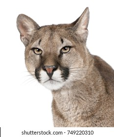 Close-up portrait of Puma cub, Puma concolor, 1 year old, in front of white background, studio shot