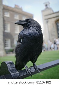 Closeup portrait of sitting black raven in the Tower of London, UK