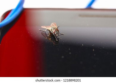 Close-up portrait of a small housefly. beautiful insect.