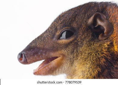 closeup portrait of squirrel on white background