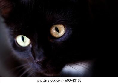 close-up portrait of a surprised black cat