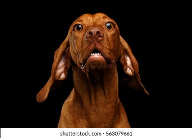 2a395f7b1f6 Surprised Dog Images, Stock Photos & Vectors | Shutterstock