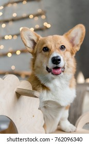 A close-up portrait of a welsh corgi pembroke puppy leaning on a wooden rocking horse