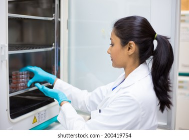 Closeup portrait, young lab researcher holding tissue culture dishes in incubator. Isolated lab background