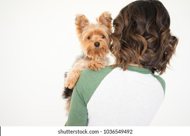 Closeup portrait of young woman holding Yorkshire terrier that is looking at camera. Dog concept. Isolated back view on white background.