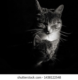 Closeup portret of cat with little fluffy kitten on a black background - Shutterstock ID 1438122548