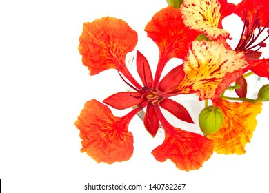 Royalty Free Pride Of Barbados Images Stock Photos Vectors