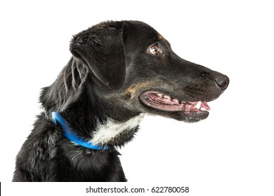Closeup profile of face of happy black and tan hound dog over white