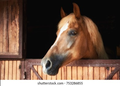 Closeup profile portrait of a beautiful horse behind a wooden stable door