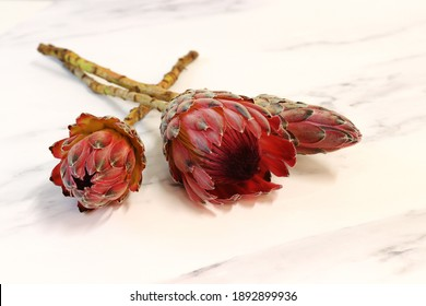 Close-up of a protea flower on a marble background