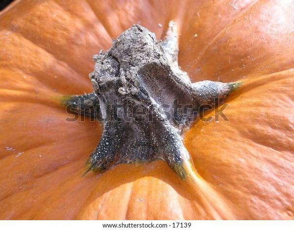 A close-up of a pumpkin.