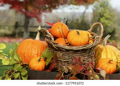 Closeup of pumpkins and gourds on old barrel