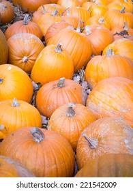 A closeup of pumpkins at a local market