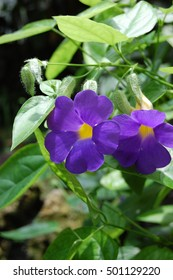 Closeup of purple flower with yellow center