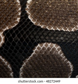Close-up of Python regius snake scales