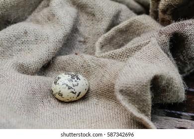 Closeup quail egg on the background of sackcloth