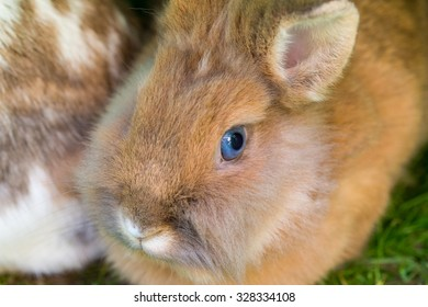 Closeup of a rabbit with shallow depth of field