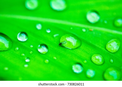 Closeup raindrop cover on the leaf after rainy day