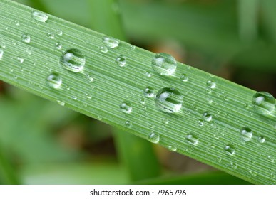 Close-up of raindrops (dewdrops) on a blade of grass