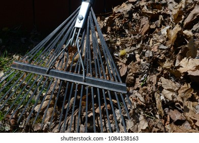 Closeup of a raked pile of leaves.