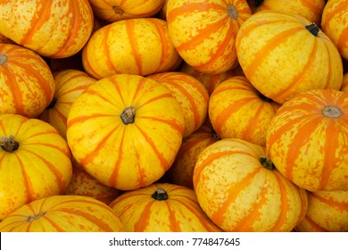 Closeup of random pile of recently harvested orange and yellow Tiger pumpkins