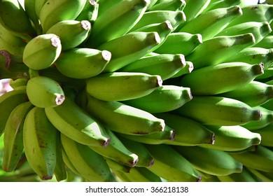 Closeup of raw green plantain fruits.