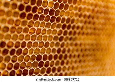 Closeup raw organic Honeycombs . Newly pulled honey bee honeycomb beeswax .