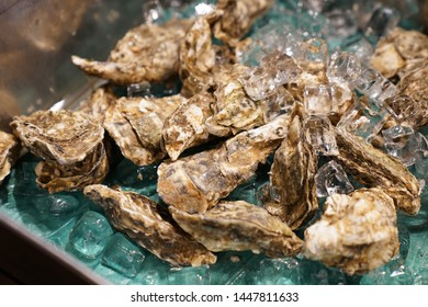 closeup raw oysters with ice