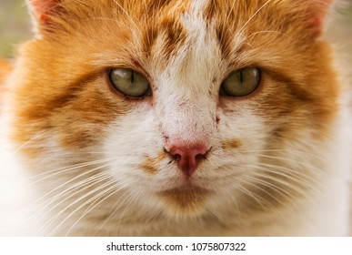Close-up of red cat with green eyes looking at camera.