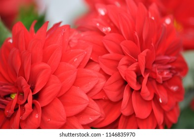Closeup red flower