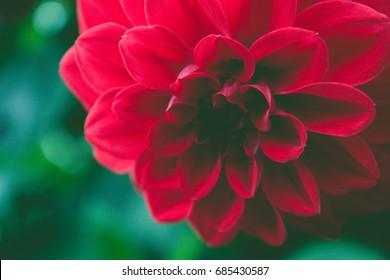 Closeup red flower