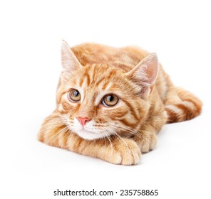 Close-up of red kitten isolated on a white background