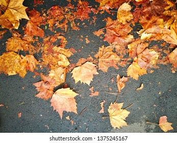 Fall Leafs Wallpaper Stock Photos Images Photography
