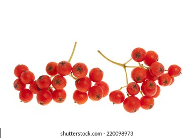 Closeup of red mountain ash or rowan berries isolated on white background