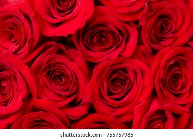 Close-up of red rose blossoms for background