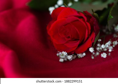 Close-up of a red rose with gypsophilia on a red surface. Landscape orientation, limited depth of field, negative space
