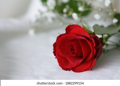 Close-up of a red rose with gypsophilia on a white surface. Landscape orientation, limited depth of field, copy space