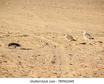 Closeup of the red sea beach in Sinai Egypt