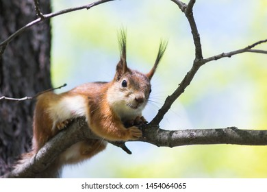 Squirrel Pose Images, Stock Photos & Vectors | Shutterstock
