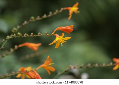 Close-up of red-orange flowers.