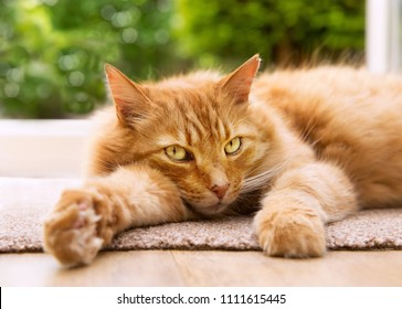 Close-up of a relaxed cat lying on a mat next to a patio door leading to the garden.